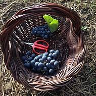 Colheita de uvas faz parte do prgrama!