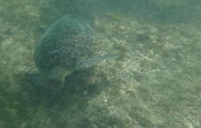 Local onde existem muitos peixes e tartarugas!