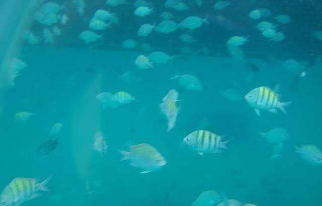 Nadar com peixinhos