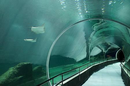 AquaRio - Grande Tanque Oceânico, uma das principais atrações