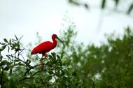 Pássaros podem ser observados em diversos passeios