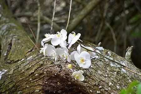 Jardim Uaná Etê - Orquídeas marcam presença na primavera