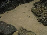 Peixinhos nas águas da Baía do Sancho