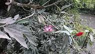 Cerca viva... de flores