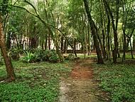 Bosque da Brasital