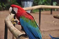 Arara do Parque das Aves