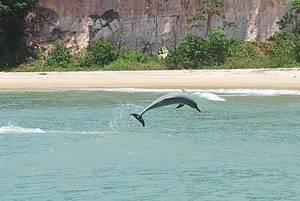 Passeio de barco: Show de acrobacias durante passeios de barco na Baía dos Golfinhos! -