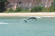 Show de acrobacias durante passeios de barco na Baía dos Golfinhos!