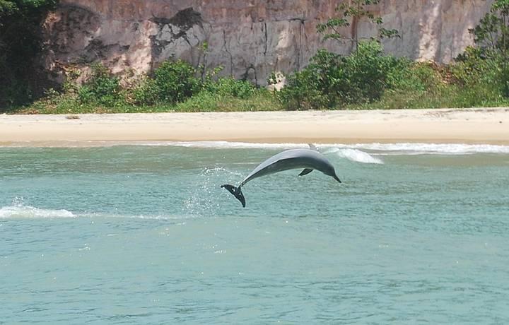 Resultado de imagem para praia da pipa golfinhos