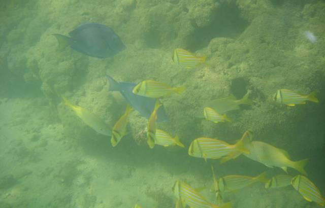 Cardume de Peixes em Recife de Fora