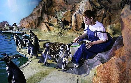 Acqua Mundo - Pinguins fazem fila na hora da comida!