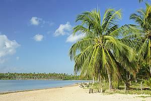 Praia de Camaragibe: Muito verde e azul no encontro de mar, céu, coqueiros e rios -