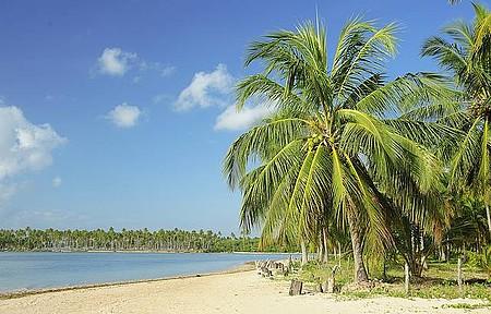 Praia de Camaragibe - Muito verde e azul no encontro de mar, céu, coqueiros e rios