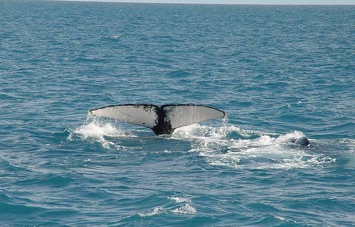Passeio em busca de avistar as baleias!