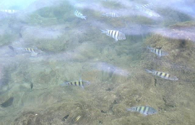 Peixinhos das piscinas naturais!