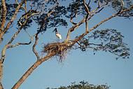 Ciclo da vida no Pantanal