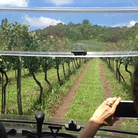 Tour Experience circula em meio dos vinhedos!