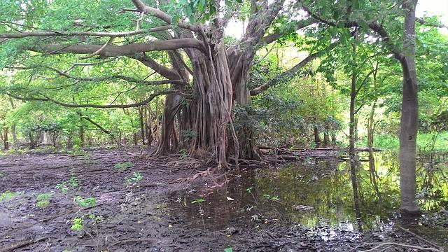 Arredores do Canal do Jarí
