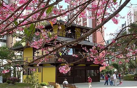 Cerejeiras floridas encatam que passa.