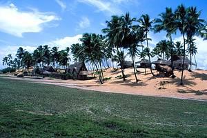 Rusticidade: Cabanas de sap� interagem com coqueirais<br>