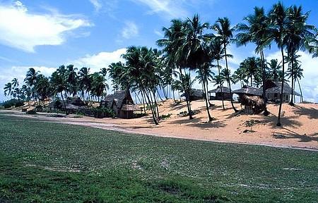Rusticidade - Cabanas de sapé interagem com coqueirais