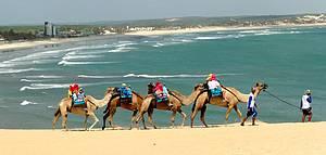 Genipabu: Dromedários conduzem visitantes pelas dunas<br>