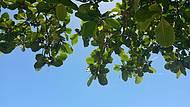 Céu azul e natureza