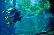 Mergulhadores se encantam