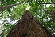 Refugio reúne árvores centenárias