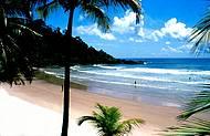 Trilhas de f�cil acesso levam � primitiva praia de Engenhoca