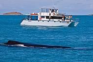 Baleias fazem a festa entre julho e outubro