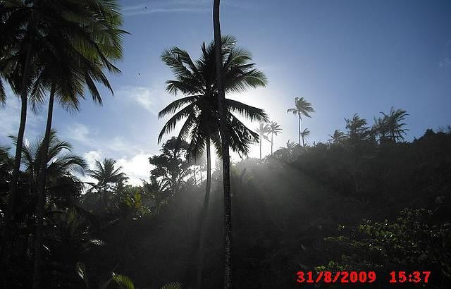 Fez-se a luz - Coqueiro na Praia de Itacarezinho.