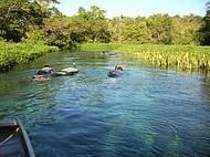 Rio Sucuri com uma beleza impar, devido á flora e fauna existente