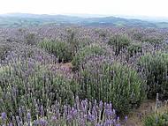 Paisagem combina campos floridos e muitas montanhas