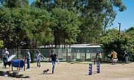 Dog Park oferece obstáculos e muita diversão