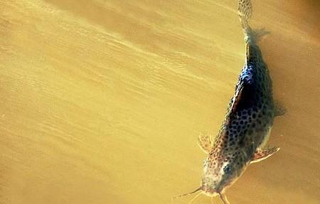 Guararema é um dos pontos em que se encontra o Rio Paraíba sem poluição - Incrível!