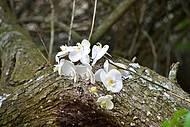 Orquideas em flor na primavera