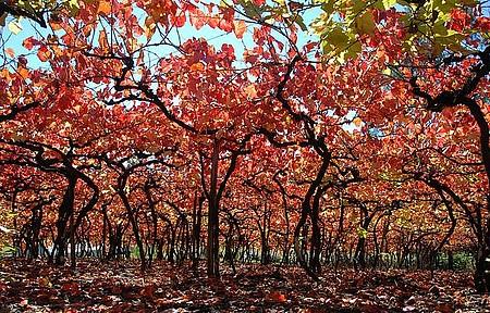 Outono - Parreirais ganham lindas nuances