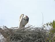Uma das mais belas aves