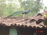 Fazenda Murycana