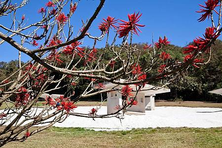 Instituto Inhotim - No Desert Park, o vermelho vivo das flores do Mulungú