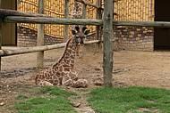 Zoo reúne filhotes muito fofos!