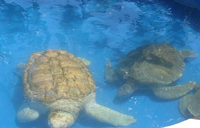 Tanque das tartarugas