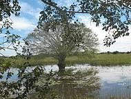 Árvores típicas se confundem com as lagoas