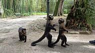 Jd Botânico Muitos Macacos