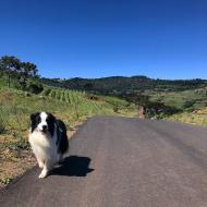 Rota asfaltada leva aos vinhedos da Villaggio Bassetti