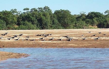 Praia no rio Araguaia - Andorinhas do rio Araguaia