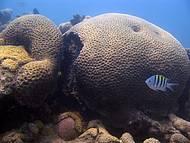 No Eco Parque, tanques reproduzem corais