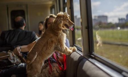 Cães e gatos podem viajar de trem em Curitiba (PR)! - Pets ganham vagão especial com janelas panorâmicas!