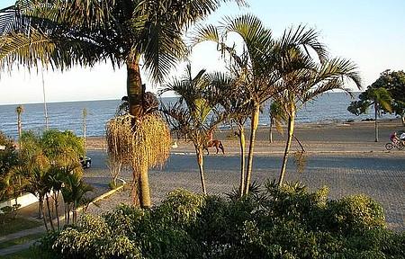 Palmeiras & Lagoa. - Da janela do Hotel.